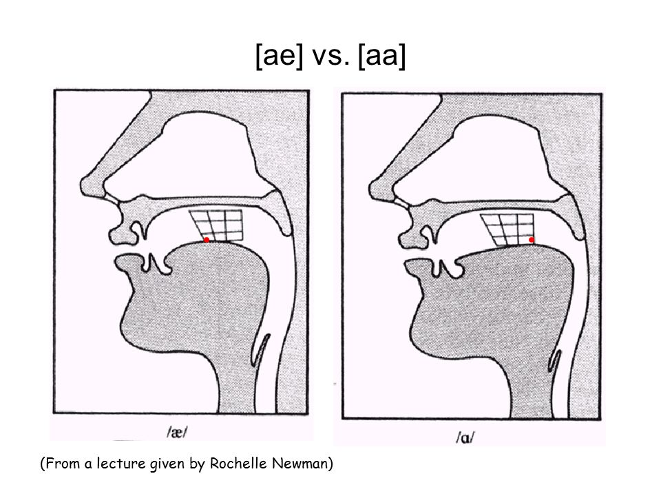 [ae] vs. [aa] (From a lecture given by Rochelle Newman)